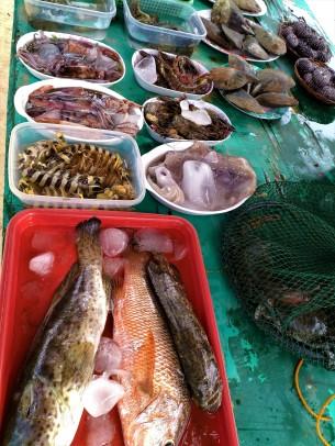 seafood on display